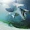 Bottlenose_dolphins_hawaii