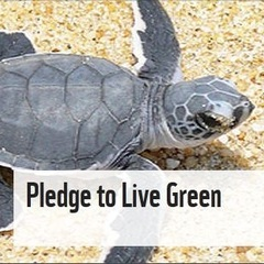 Eating turtle eggs should be BANNED. Agree? Pledge here!