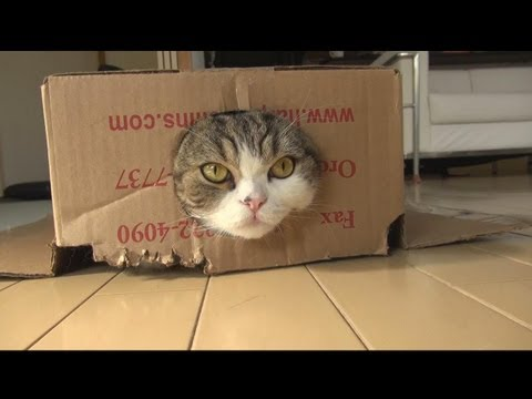Maru: The Strangest Cat on the Internet