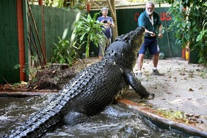 World's Largest Captive Crocodile Lolong Dies In Philippines