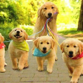 Mom Walks Her Puppies